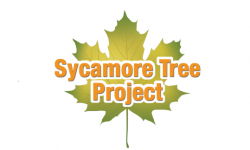 sycamore-treee-project