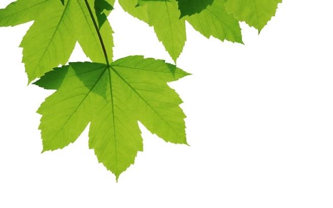 Sycamore Tree logo